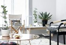 Decor with cactus and plants