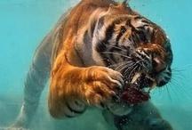 Inspiring Wildlife Photography