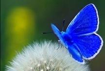 Cobalt Blue Obsession
