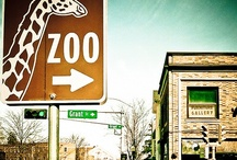 ZOO LIFE / by T S