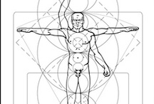 body proportion | anatomy / people proportion, anatomy, human anatomy, drawing proportions of the human body