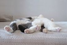 Cute Sleeping Pets / Some of the cutest sleeping pets we've ever seen!
