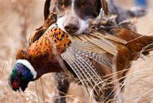 Hunting / by Joel Castellanos Navarrete