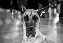 pies psa psu psy psów psi psiaki pieski szczeniak szczeniaka / wszystko co  fajne i ciekawe związane z psami