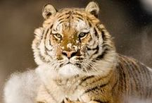 animalpresent i dzikie zwierzęta