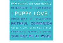 Jack&Rat terriers / Small dogs / by Joe Saffa