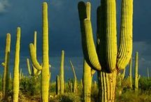 Sonoran Desert Museum-Tucson-AWESOME / by T S
