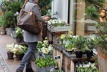 vitr i n a v e r d e / escaparate de plantas y flores