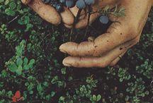 ~ Nature | Jardin ~ / Considère ton âme comme un jardin. Ratisse la terre. Plante. Promène toi. Prends en soin. Admire la floraison.