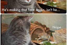 Humor / by Jess Foucart