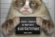 I love Tard The Grumpy Cat / by Esther Gonzalez