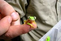Other Herps / Amphibians & reptiles