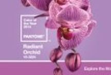 2014 Color of the Year / Pantone Radient Orchid