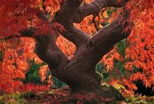 By my tree / Beautiful trees / by Patrick Vincent