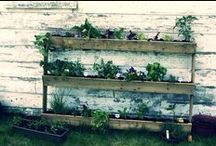 Fines herbes jardinage