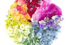 Colour...!