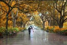 Savannah in Fall  / Zeigler House Inn says that B&B fall / autumn holidays in #Savannah, #Georgia #USA, are dashed with color and adventure. After all, it's high season in Savannah, proclaimed by ghost hunters as the most haunted city in America. That leaves the rest of the city for the rest of us! The weather is ideal for exploring, sightseeing, shopping, and getting out on waterways that ebb and flow into the Atlantic Ocean.  / by Zeigler House Inn