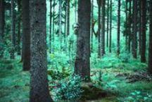 Jannys Camouflage-Bodypainting / Eine Form des Bodypaintings, wobei die Körper mit der Umgebung verschmelzen.