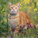 Garden Cats / Photos of cats in the garden and cat-themed garden products