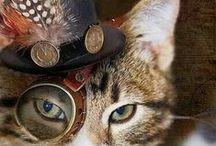 Steampunk Cats / Cats with steampunk themes