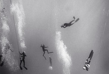 Underwater pictures on the web