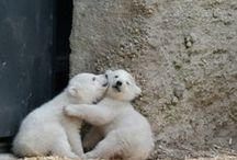 Animales / Buenas fotos de osos, perros, leones, tigres, etc.