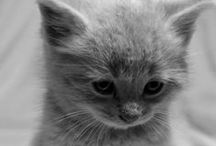 gatti e animaletti / raccolta di immagini di gatti o animaletti carini e teneri
