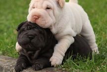 Puppies & Dogs