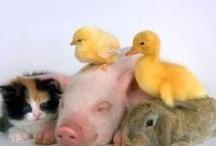Cute Little Piggy's  <3 / by Lori Frutchey Noonan