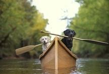 Puppy Wuppy Uppies :) / by Lori Frutchey Noonan
