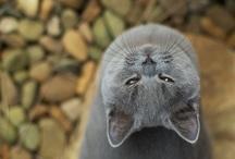 Kitty Kats / by Lori Frutchey Noonan