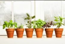 Herbs Wonderful Herbs!  / Recipes, Cool Tips, How to Use
