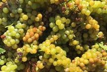 Winemaking & Harvest / The process of turning our estate grapes from our vineyards into wine is a delicate balance of tradition and technology, art and science...