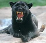 Bearizona Wildlife Park / Bearizona's Animals