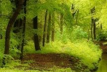 FAIRYTALE FORESTS / The magic hidden within the forests captures in a few pictures.  / by Cecilia X.Camilli