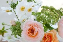 flowers°•. ‿✿⁀