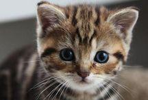 Kitten / Meow~