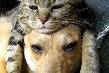 Cani, gatti e altro... / by Gianfranca Barone