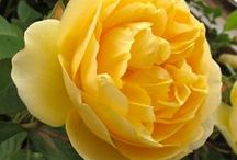 Spring Color Trend: Buttercup