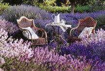 ~~~ Garden Dreaming ****