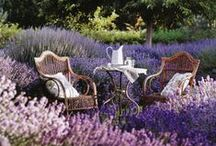 Lovely gardens & greenhouses