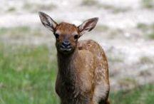Wildlife babies / Because everyone loves a good baby animal photo.