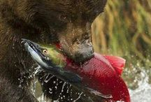 Predators in action / Nature is beautiful. And often times graphic. But everyone has to eat, right?