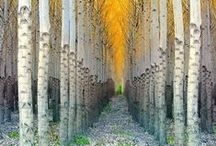 ~~~ Trees ****