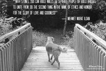Canine Wisdom