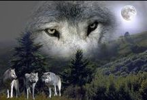 Wolves- We Need Them!