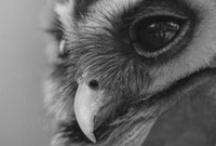 Owls / by Francine Bacchini