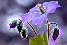 Blooming Beauties / The amazing beauty of flowers of every variety. / by Francine Bacchini