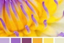 Color my World / Color inspiration from nature, the garden and farmer's markets around the world