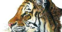 Animal Drawings and Paintings / My artwork depicting animals, including cats, birds and wildlife.  Pencil sketches, pencil drawings and paintings.